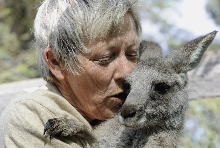 <p>A joey rescued from a bushfire is cared for in Gisborne, Australia. Kangaroos rarely attack humans, but Australian police had to use pepper spray to fight off a rogue kangaroo that recently attacked a 94-year-old woman in her backyard.</p>