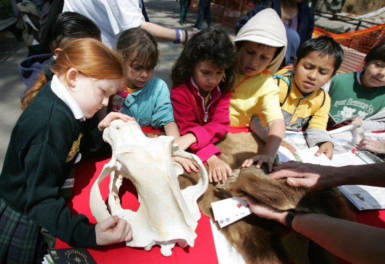 <p>Schoolchildren inspect a bear skull and hide at the San Francisco Zoo. Scientists recently discovered four perfectly preserved prehistoric bear skulls in underwater caves in Mexico.</p>