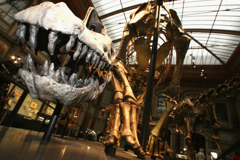<p>A brachiosaurus skull sits in the Natural History Museum in Berlin, Germany, on July 13, 2007. The centerpiece is the world's largest mounted dinosaur skeleton, a brachiosaurus brancai, at more than 50-feet long and 42-feet tall.</p>