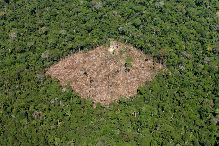 <p>A photo  released by Brazil's environment ministry shows a deforested area in the rain forest in the southern Para state.</p>