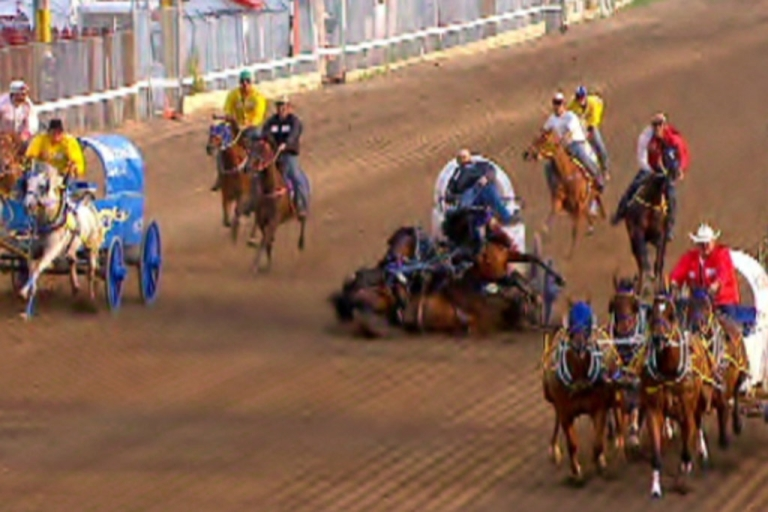 <p>One of Chad Harden's horses apparently collapsed and died during a chuckwagon race at the Calgary Stampede on July 12, 2012, causing the others on the team to crumple to the ground. Three horses died.</p>