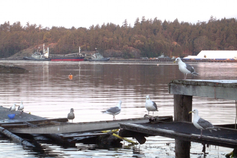 <p>Two Canadian navy tugboats guide MV Sun Sea, suspected of carrying 492 Tamil migrants, into dock at Canadian Forces Base Esquimalt in British Columbia on August 13, 2010</p>
