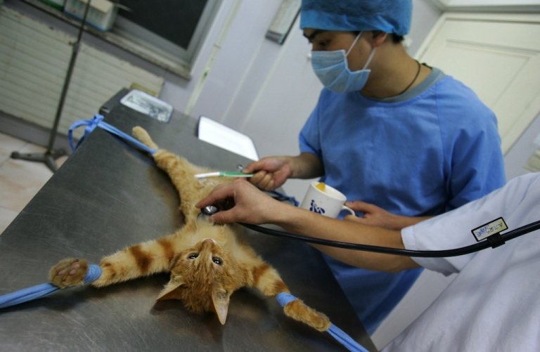 <p>A cat that may have transmitted the Black Death to an Oregon man has been sent to the Center for Disease Control and Prevention for testing.</p>