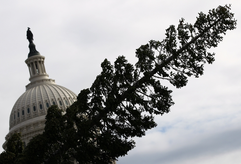 <p>Workers install the Christmas tree at the U.S. Capitol in Washington, D.C., on Nov. 28, 2011.</p>