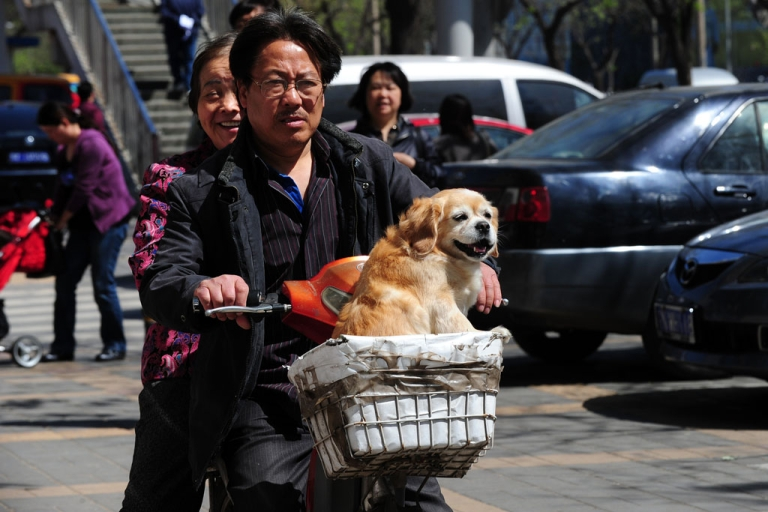 <p>A dog rides in the basket of an electric bicycle in Beijing on April 18, 2011.</p>