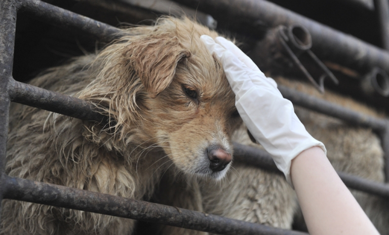<p>A Chinese animal lover consoles a dog after a convoy of trucks carrying some 500 dogs to be sold as meat, were stopped along a highway in Beijing on early April 17, 2011, and the dogs were later rescued to the China Animal Protection Association.</p>
