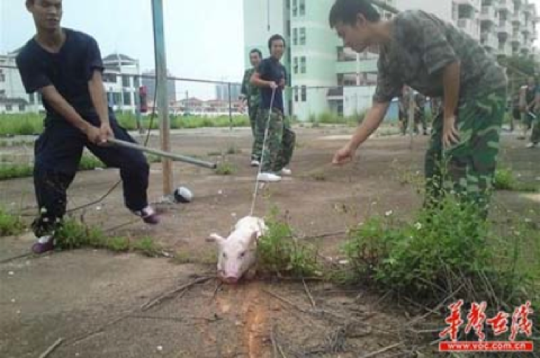 <p>Young Chinese students claim photos of apparent pig torture are really just a