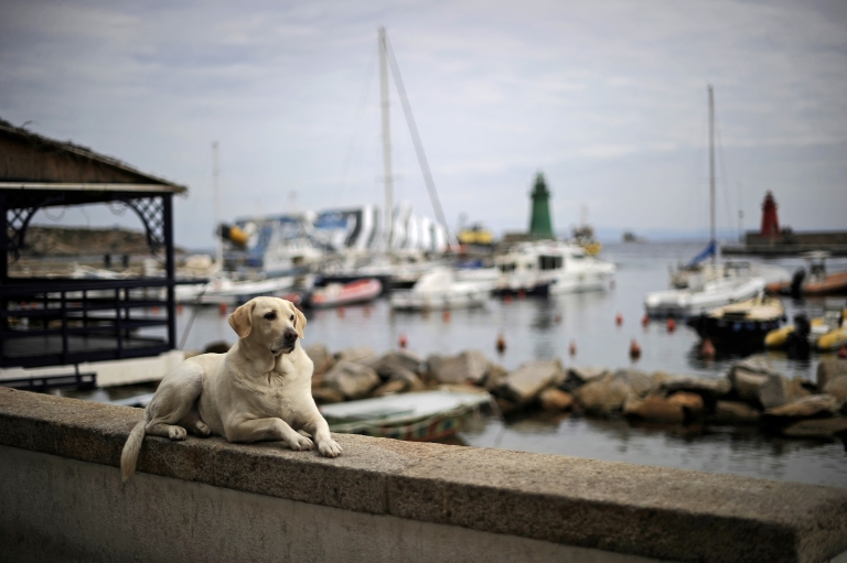<p>A dog lies on a small wall as the stricken cruise liner Costa Concordia lies aground in front of Giglio Island on Jan 27.</p>