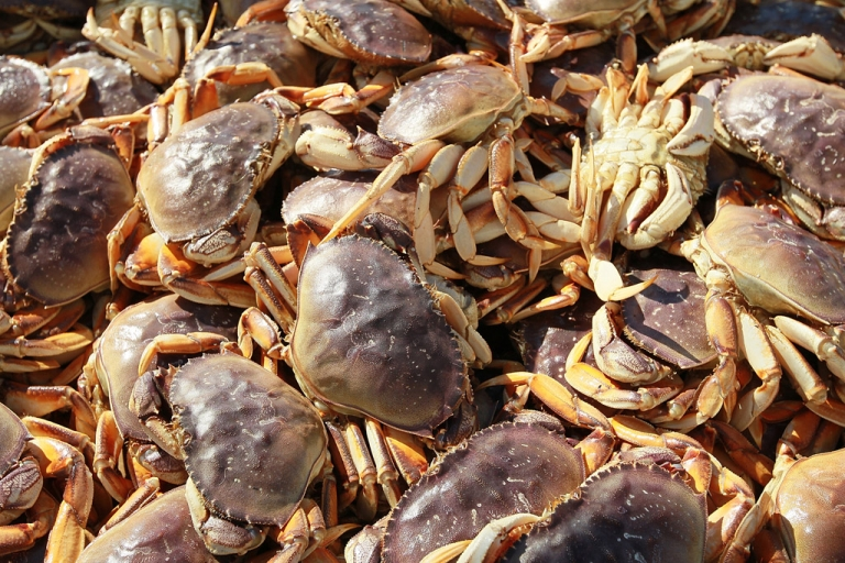 <p>The recently discovered yeti crab is far from your average crustacean: it has a hairy chest and arms.</p>