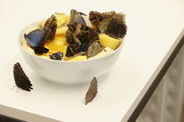<p>Live butterflies sit in a bowl of fruit in an installation 'In and Out of Love' by Damien Hirst in the Tate Modern art gallery on April 2, 2012 in London, England. The Tate Modern is displaying the first major exhibition of Damien Hirst's artworks in the UK, bringing together the collection over 70 of Hirst's works spanning three decades.</p>