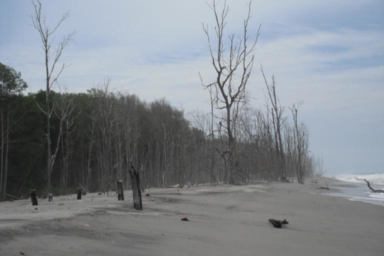 <p>Dead mangrove trees jut out of the encroaching sand in La Tirana, El Salvador.</p>