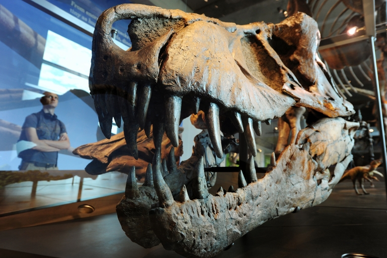 <p>A visitor looks at a the skull of a Tyrannosaurus rex at the all-new 14,000 square foot Dinosaur Hall permanent exhibition at the Natural History Museum of Los Angeles July 7, 2011.</p>