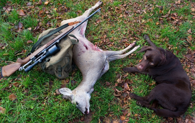 <p>A hunter's weapon lies against a slain deer next to a dog near in the eastern German city of Sieversdorf on Nov. 20, 2010. The month of November is the main hunting period in the region.</p>