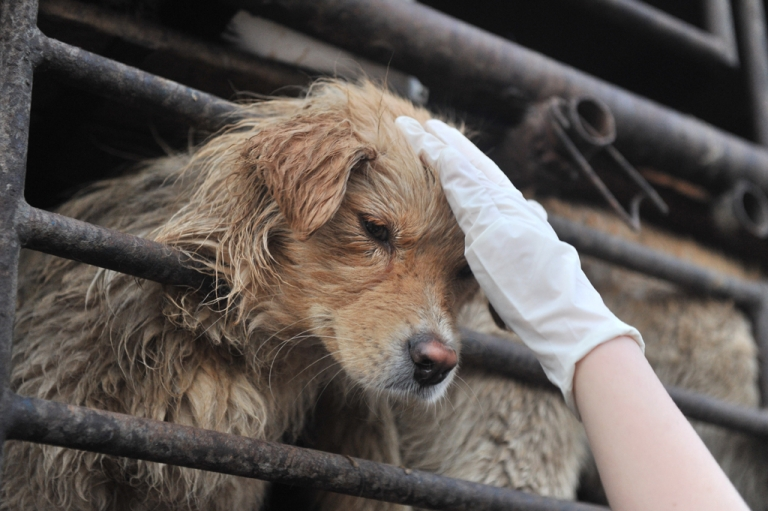 <p>An animal lover consoles a dog after a convoy of trucks carrying some 500 dogs to be sold as meat was stopped on a highway in Beijing on April 17, 2011.</p>