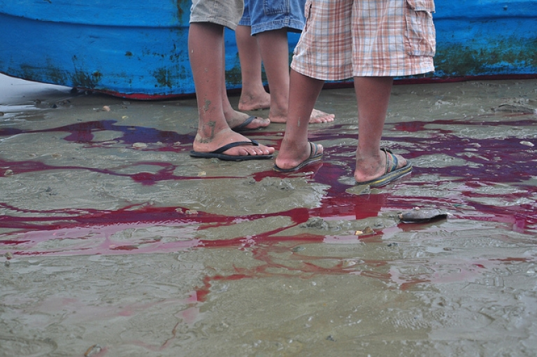<p>Curious locals stand in pools of shark blood on the beach of Puerto Lopez, Ecuador fish market.</p>