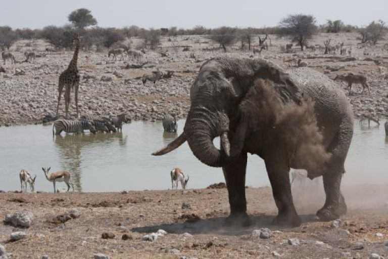 <p>Our correspondent live-tweets a safari in Namibia.</p>