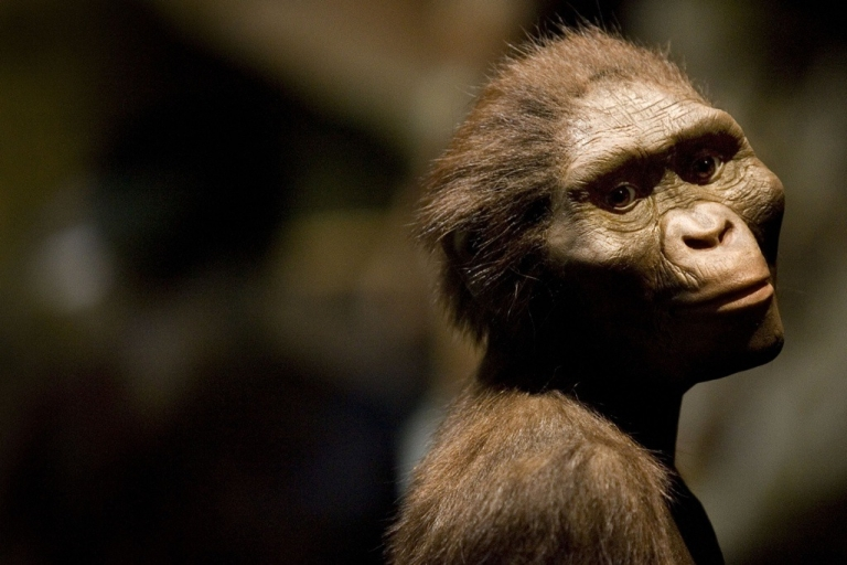<p>A tiny fossil found in Ethiopia links humans to a small species that probably lived in trees 3.4 million years ago, about the same time as