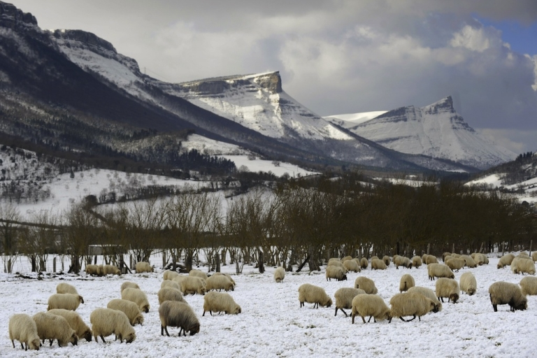 <p>A flock of sheep look for grass at a farm covered by snow, in the Northern Spanish Basque village of Orduna, on Feb. 3, 2012. Countries from Italy to Ukraine struggle to cope with temperatures that plunged to record lows in some places.</p>