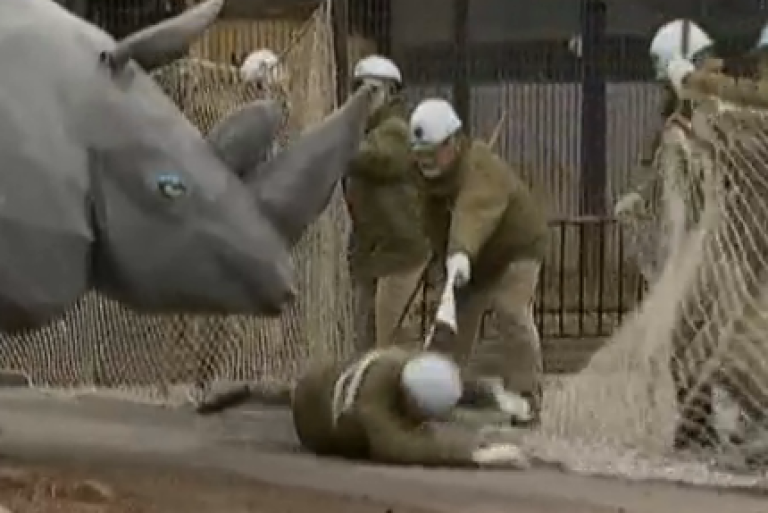 <p>Tokyo zoo keepers battle to keep a fake rhino from escaping during a drill.</p>
