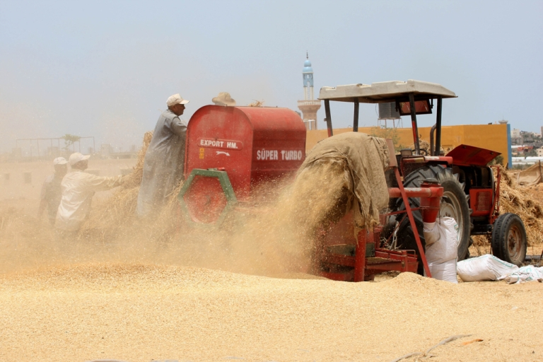 <p>Palestinian farmers load a combine harvester with wheat during the annual harvest season in Rafah, near the Egyptian border, in the southern Gaza Strip on May 22, 2012.</p>