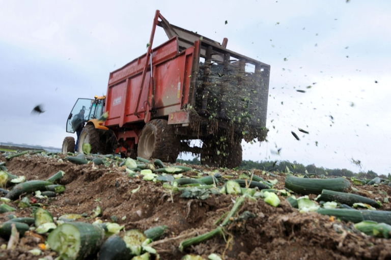 <p>A tractor spreads destroyed cucumbers to fertilize a field, on June 06, 2011 in Carquefou, western France. Cucumbers sales collapsed on French markets due to the fear of E. coli contamination, even though the outbreak in Germany was eventually pinned on local sprouts.</p>