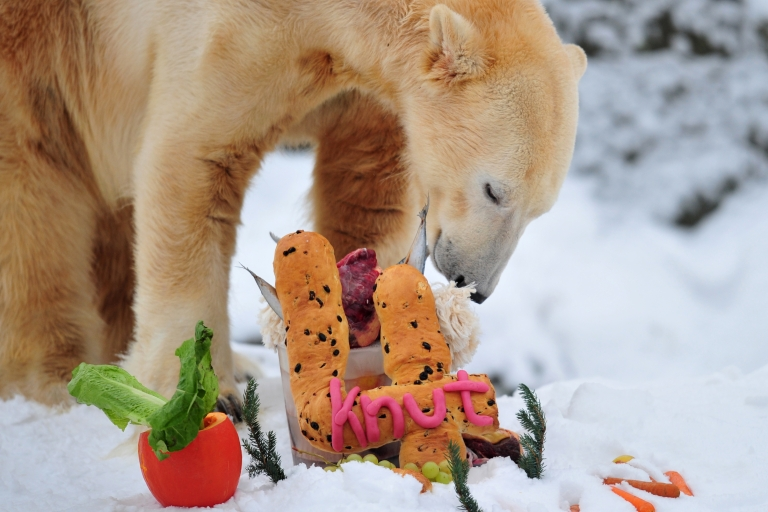 <p>The world's most famous polar bear Knut eats his birthday cake on his fourth birthday in his snow-covered enclosure at the Tiergarten zoo in Berlin, on Dec. 5, 2010 in Berlin.</p>