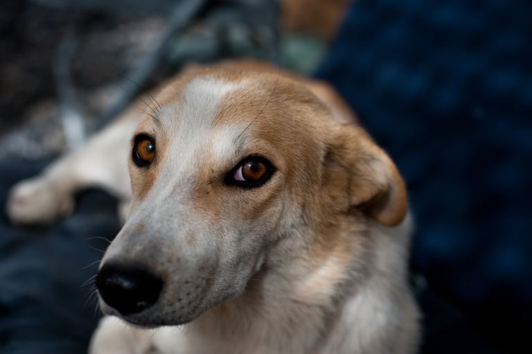 <p>Giselle is much healthier than most of the stray dogs that soldiers adopt in Afghanistan.</p>