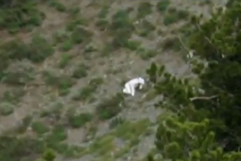 <p>Wildlife officials in Utah are trying to identify