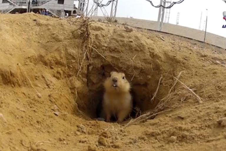 <p>A gopher in Kazakhstan living under a rocket launch pad becomes an internet sensation.</p>