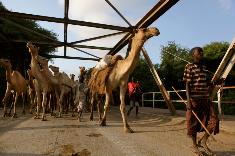 <p>As the day ends, a herd of camels is led across a bridge over the Shabelle River in the town of Afgoye, outside Mogadishu.</p>
