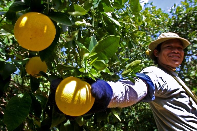 <p>Grapefruit has been linked to prescription drug overdoses.</p>