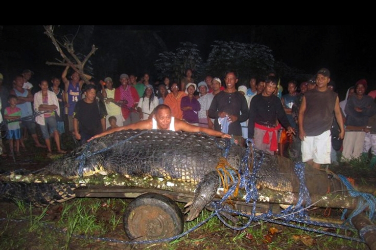 <p>This photo taken on September 4, 2011 shows villagers looking at the 21-foot (6.4 meter) saltwater crocodile caught in the town of Bunawan, Agusan del Sur province on the southern Philippine island of Mindanao. The giant saltwater crocodile weighing more than a tonne may have eaten a farmer who went missing in July, along with several water buffaloes in the southern town of Bunawan, crocodile hunter Rollie Sumiller said.</p>