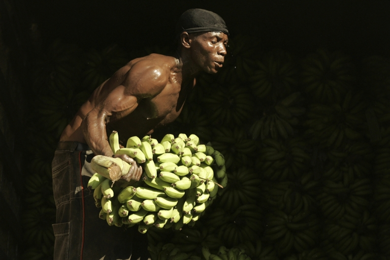 <p>A Haitian worker carries bananas at the frontier line between Malpase in Haiti and Jimani in Dominican Republic, April 10, 2007.</p>