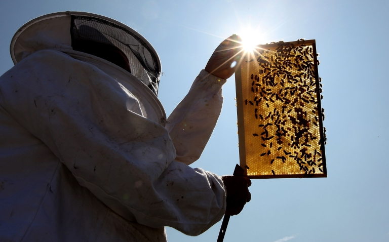 <p>LONDON, ENGLAND - JUNE 29:  Beekeeper and Chairman of The London Beekeepers Association John Chapple installs a new bee hive on an urban rooftop garden in Hackney on June 29, 2009 in London, England. It is estimated that honeybee numbers in the UK have fallen between ten and 15 per cent in the last two years.  (Photo by Dan Kitwood/Getty Images)</p>