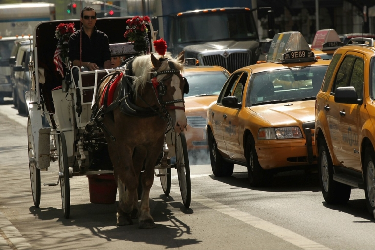 <p>The accident has reignited the debate about the treatment of horses in New York's Central Park.</p>
