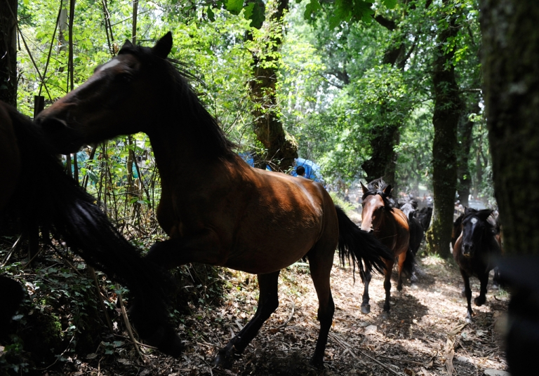 <p>PETA has attacked HBO over the deaths of two horses that occurred during filming of their new show,