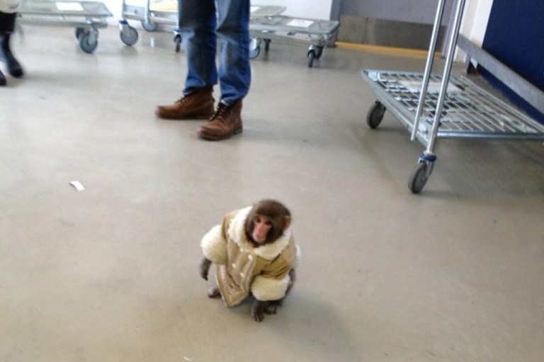 <p>A monkey in a mini shearling coat was found wandering an Ikea store in Toronto on Sunday. It was quickly detained by animal services and taken from its owners.</p>