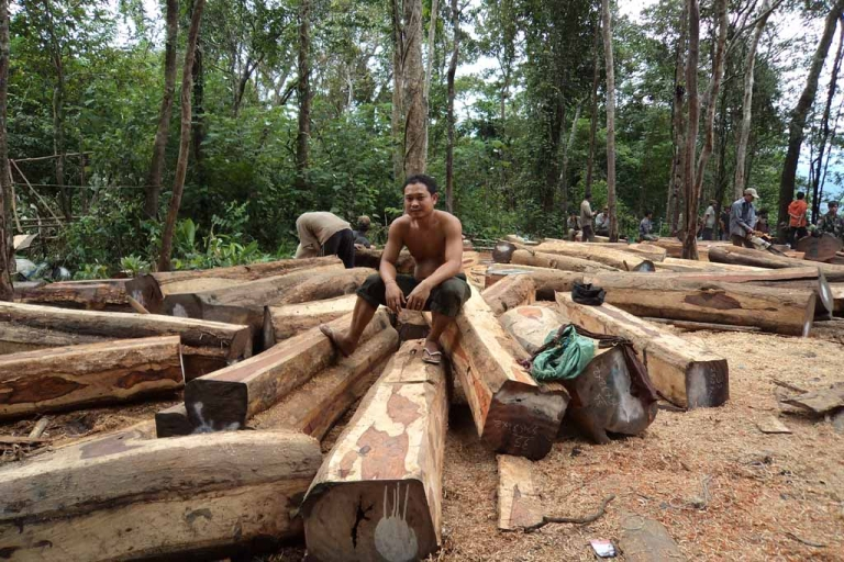 <p>Cambodian workers collect and process piles of illegally logged luxury wood in the forest in Oddar Meanchey province.</p>