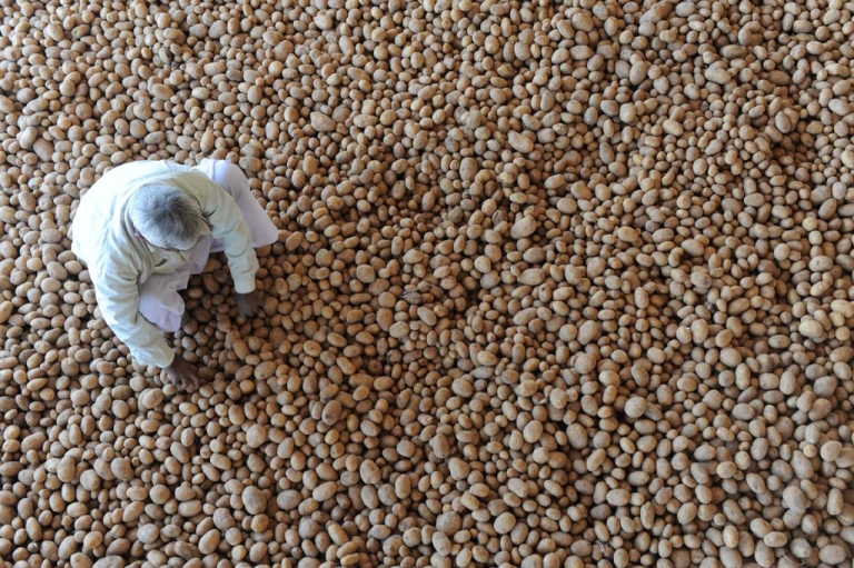 <p>An Indian worker sorts through potatoes at Shree Bhairav Cold Storage in Deesa town, outside Ahmedabad, Dec. 21, 2011.</p>