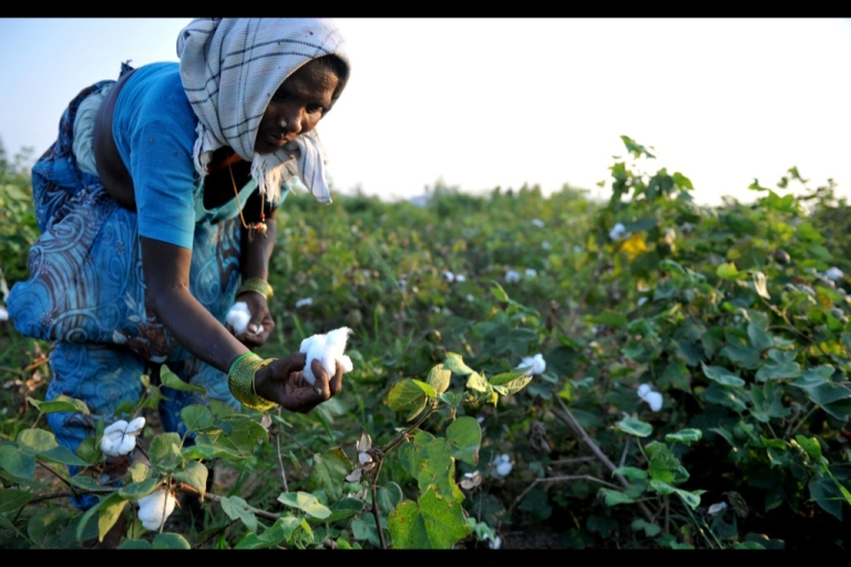 <p>Cotton is a thirsty plant and parts of India drought-prone. But the intensive farming process for cotton leaches the soil and requires high pesticide and fertiliser use that pollutes further downstream</p>