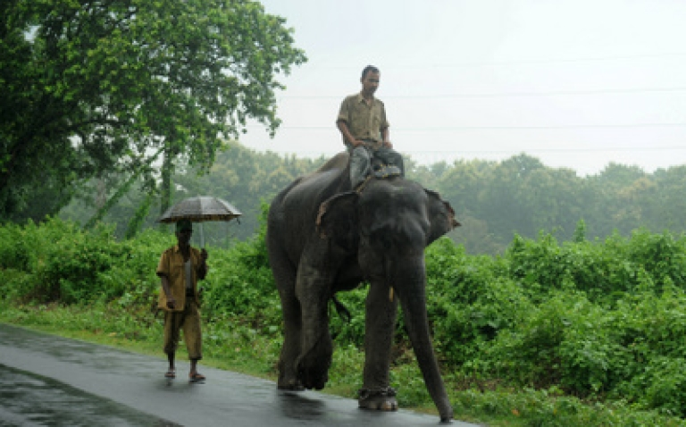 <p>An Indian forest guard rides an on elephant as he heads for a patrol in Marionbarie forest of Kurseong sub-division area, some 30 kms from Siliguri, on July 31, 2011. Indian forest officials are on the search for an injured wild elephant in the India-Nepal border area after its herd was attacked by villagers July 29 in Nepal's Jhapa district, some 9 kilometres from the border.</p>