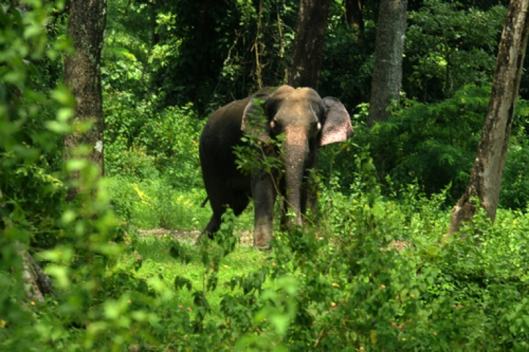 <p>India's ministry of environment and forests (MoEF) has agreed to allow companies to build power and infrastructure projects on 25 percent of forest land that was earlier categorized as a no-go area, after an intervention from the prime minister.</p>