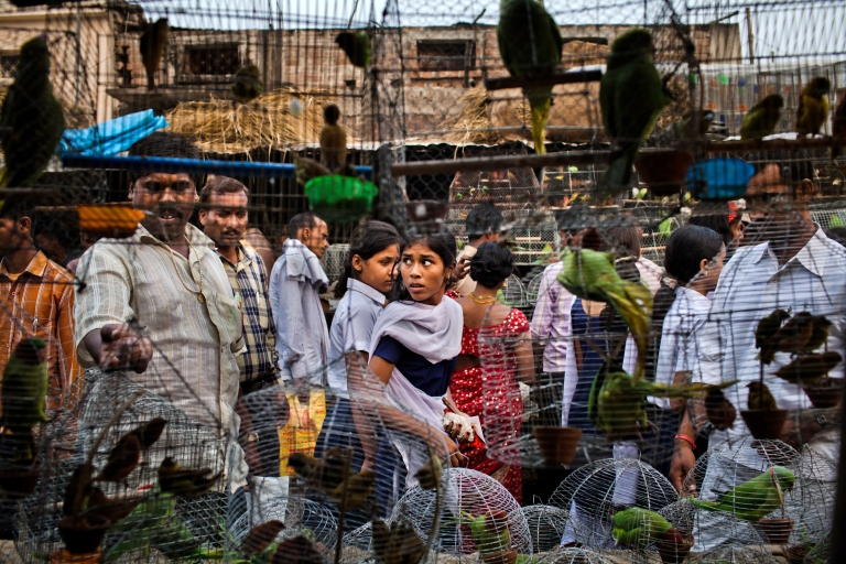 <p>People walk past cages with birds for sale at a market during the Sonepur Mela Sonepur near Patna, India. Standard and Poor indicated that India may lose its investment-grade rating due to slow growth rates and political deadlocks concerning economic policy.</p>