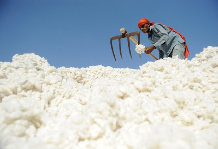 <p>This December 16, 2011 file photograph shows an Indian worker as he sorts cotton, one of India's principal exports.</p>