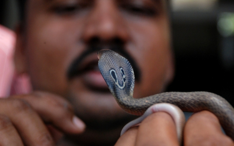 <p>Several poisonous cobras were said to be among the snakes set loose in the land revenue office in Harraiya town on November 29, 2011.</p>