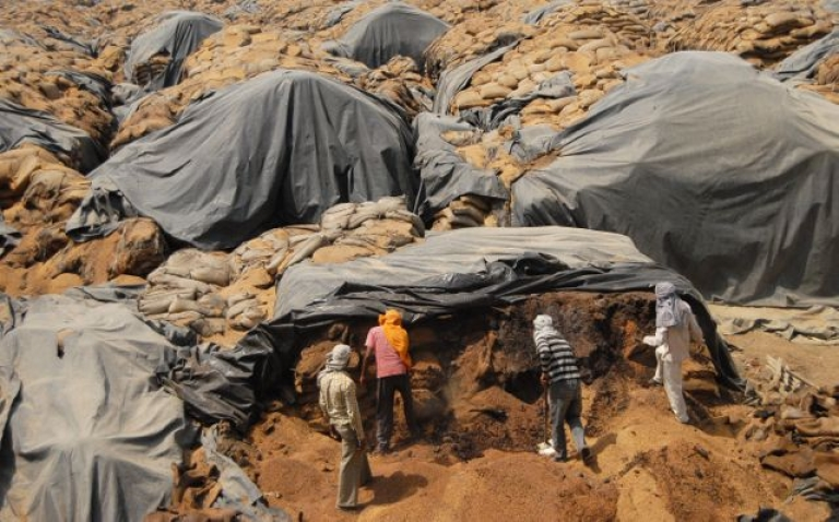 <p>Indian workers sift through rotting wheat. As a new food crisis looms due to drought in the US, India may revisit plans to allow dealers to export wheat.</p>