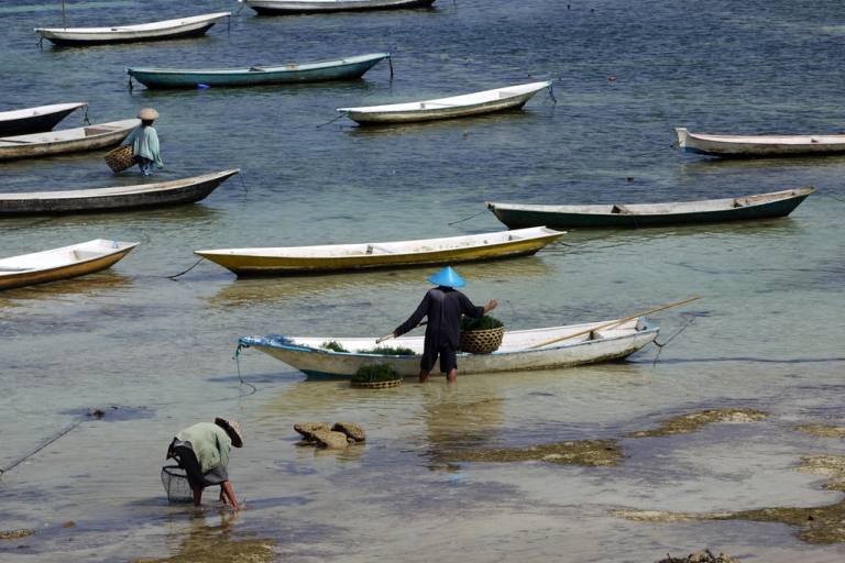 <p>Sea plants support hundreds of farmers on the island triad of Penida, Lembongan and Ceningan.</p>