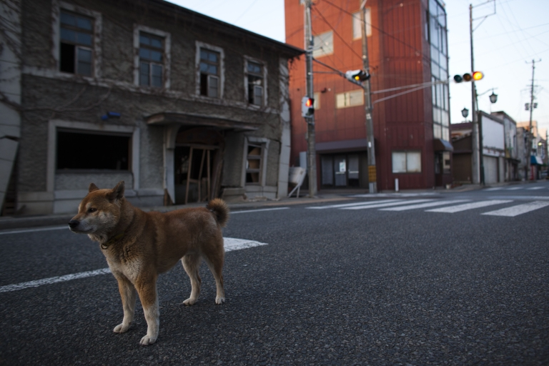 <p>An abandoned dog is seen within the evacuation zone, about 3 miles away from Fukushima Nuclear Power Plant, on April 12, 2011 in Futaba Town, Fukushima Prefecture, Japan.</p>