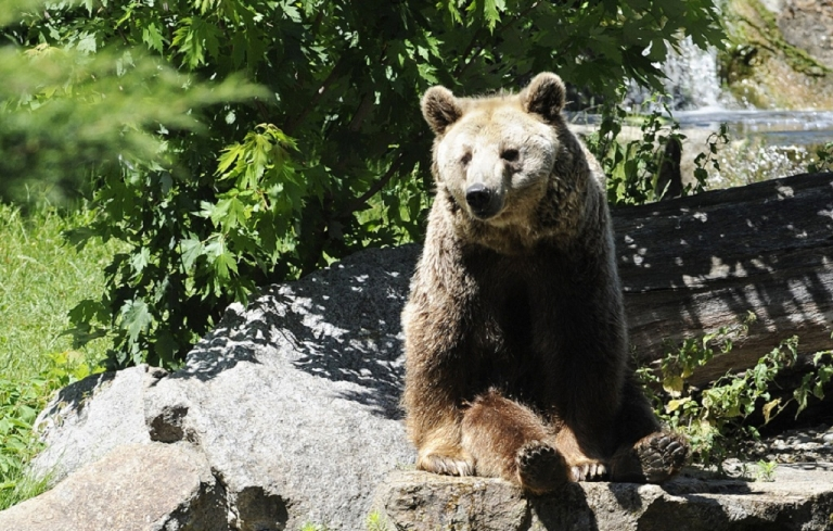 <p>Up to 38 mostly brown bears have escaped from their enclosure at the Hachimantai bear park in Akita prefecture, Japan, killing two staff members and forcing locals to stay indoors.</p>