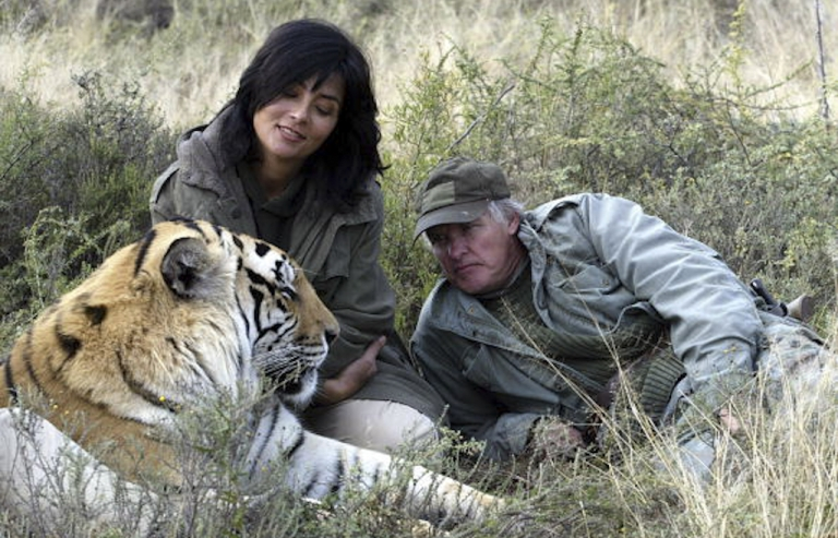 <p>Gillian van Houten and partner John Varty play with Julie, an endangered Bengal tiger being rehabilitated to live in the wild, at the Varty family's tiger sanctuary in Philippolis, South Africa. Varty, a wildlife filmmaker and conservationist, was recovering in hospital March 29, 2012 after being attacked by one of his tigers.</p>